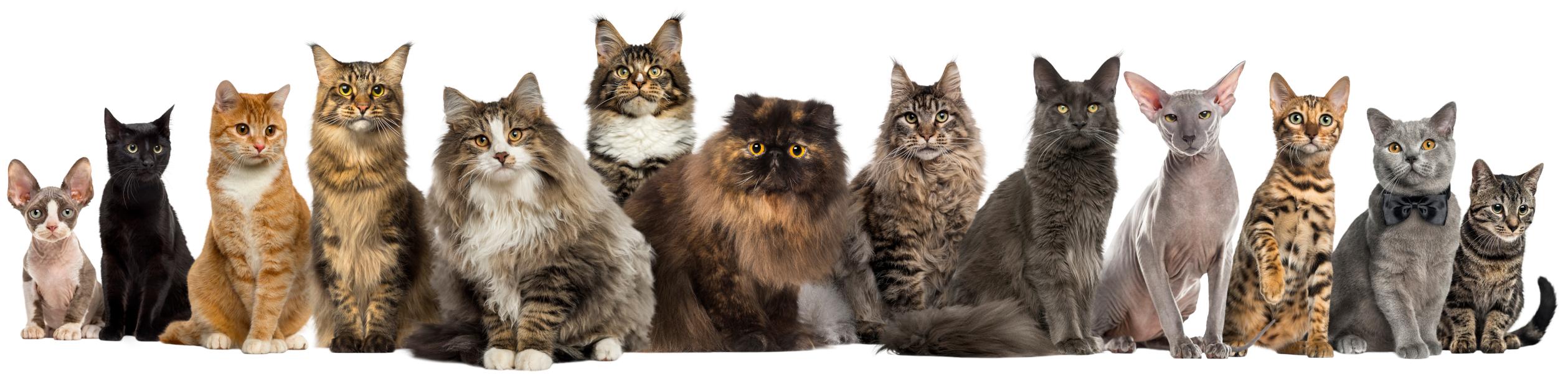 Cat Ancestry Veterinary Genetics Laboratory