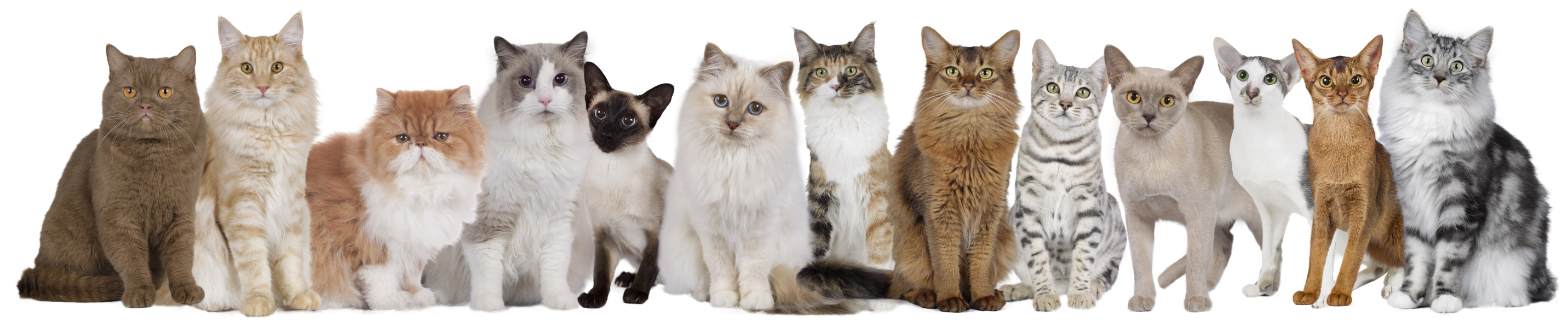 Large group of cats of different breeds and colors