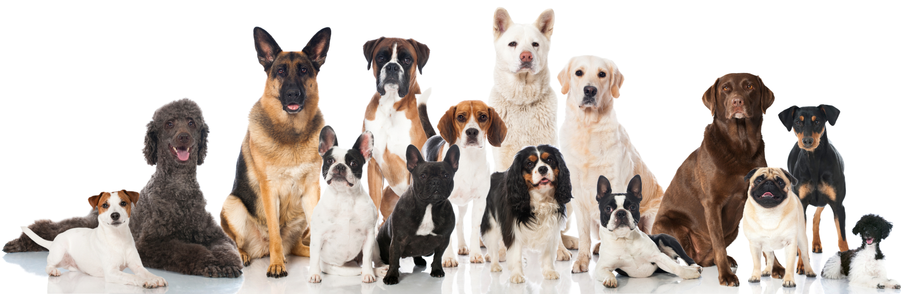 Group of multiple dogs of different breeds and coat colors