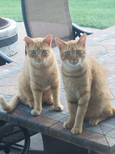 Two orange cats - Meow Meow Kitty and Prince HarryHausen