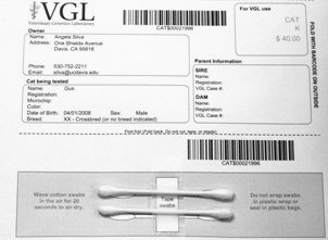 Cotton swabs taped to bar-coded submission form for VGL