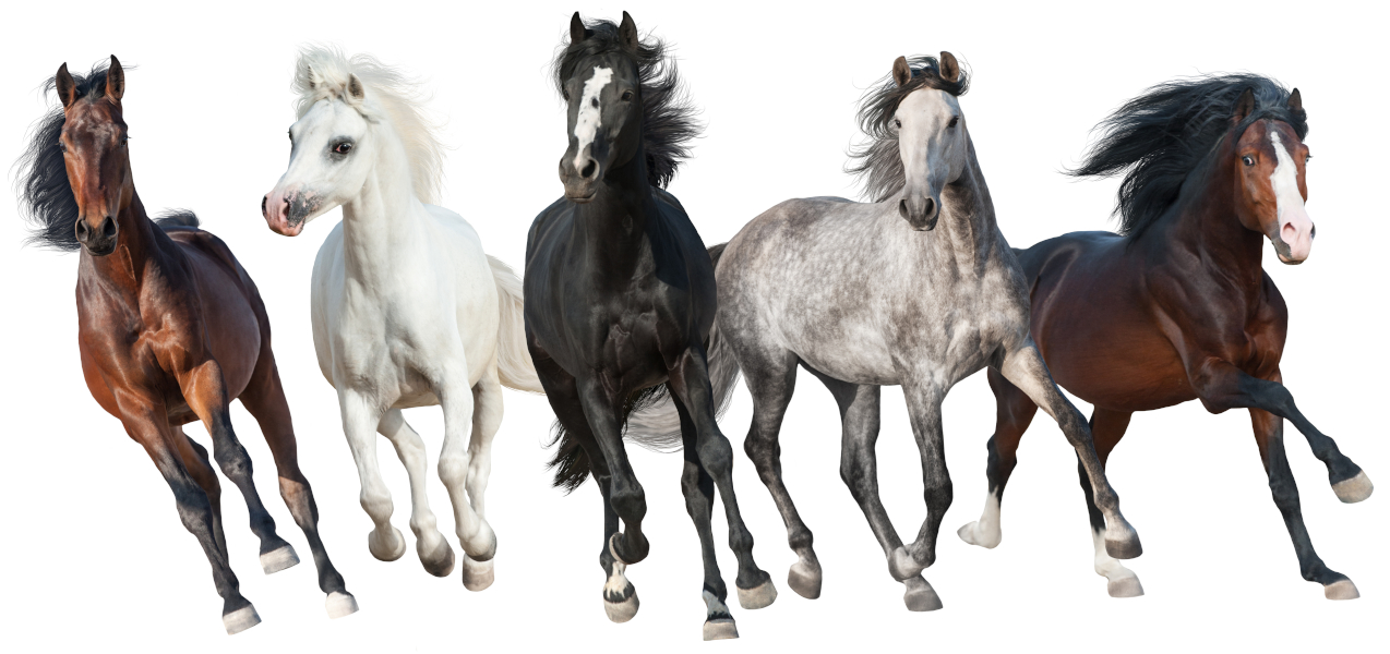 Herd of horses with different coat colors and markings