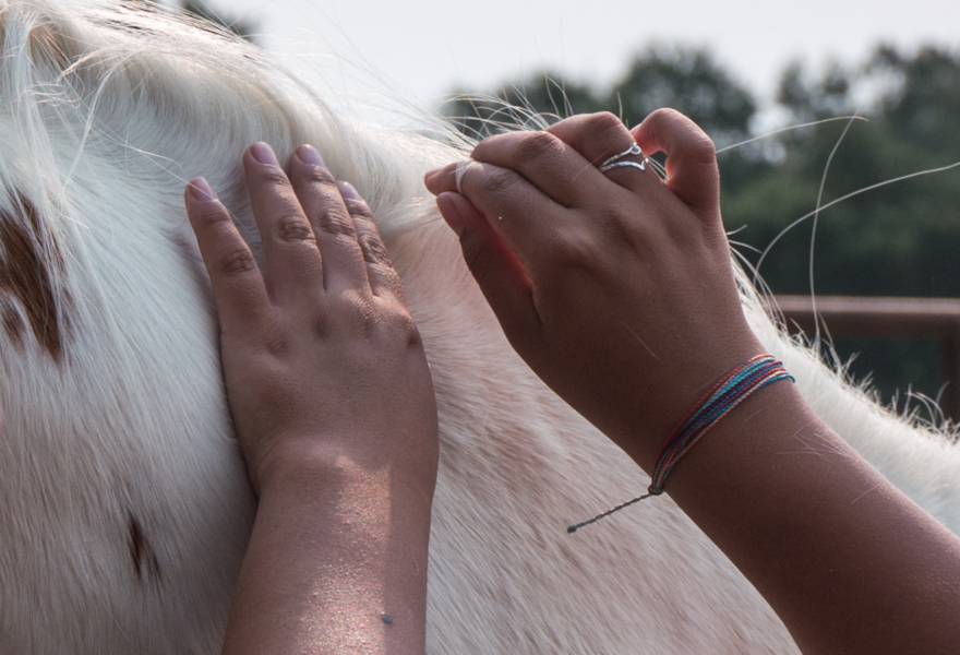 Pair of hands collecting hair sample from horse mane