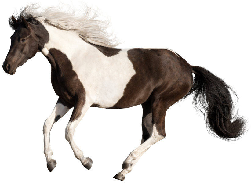 Horse with white patterning